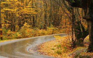 Forest-Alngdrh
